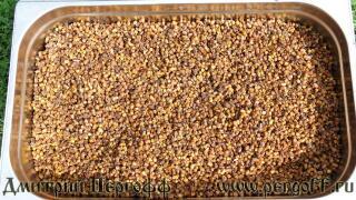 Пчелиные продукты перга