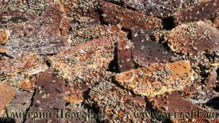 продукты пчеловодства перга
