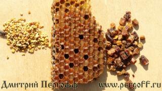 Перга и пыльца в чем разница